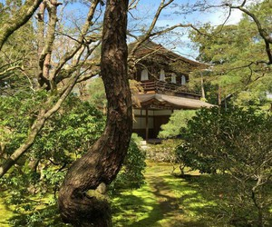 green, japan, and house image