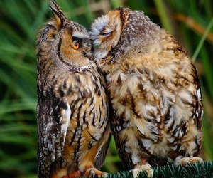 owl, animal, and kiss image