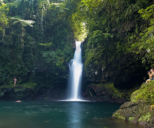 adventure, exotic, and rainforest image