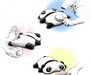 cute and panda image