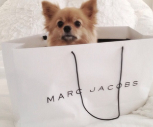 dog, marc jacobs, and cute image