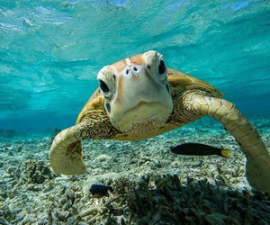 ocean, summer, and turtle image
