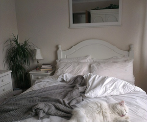 bed, cat, and white image