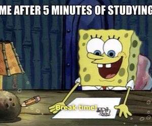 funny, spongebob, and studying image