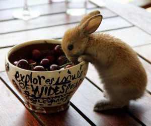 rabbit, cute, and strawberries image