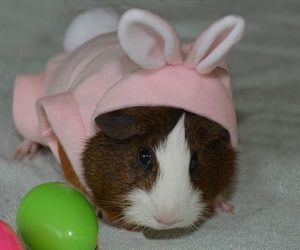 animals, easter, and cute image