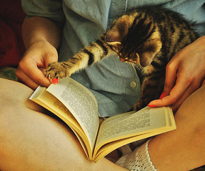 book, drugs, and cat image