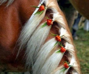 horse, flowers, and hair image