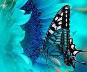 butterfly, blue, and flowers image