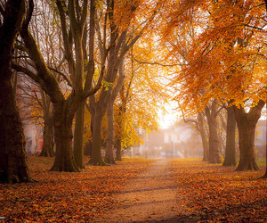 landscape, autumn, and leaves image