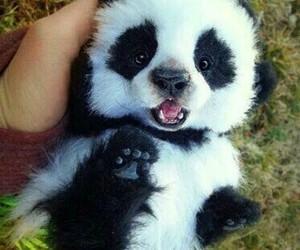panda and adorable image