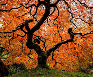 tree, beautiful, and autumn image