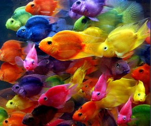 beautiful, colorful, and fishes image