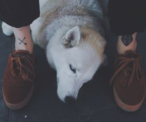 dog and husky image