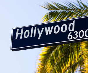 hollywood and palm tree image