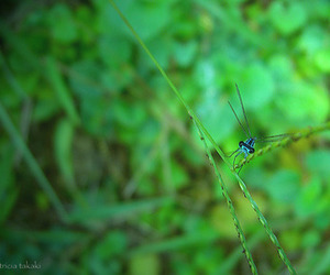 dragonfly, green, and photography image