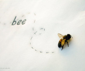 bee, photography, and takeakey image