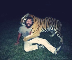 tiger, hangover, and the hangover image