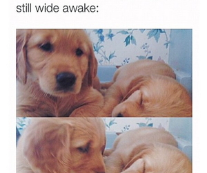 puppy, cute, and bae image