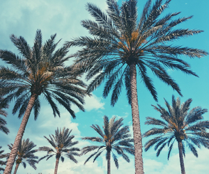 florida, palm trees, and summer image