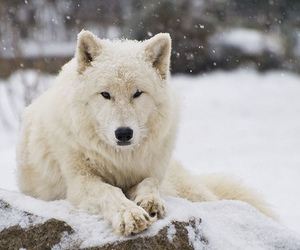 dog, nature, and snow image