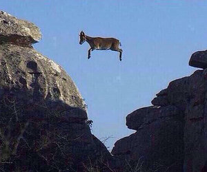 funny, goat, and fly image