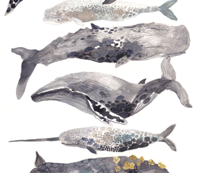 sea, whale, and drawing image