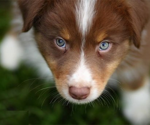 eyes, puppy, and dog image