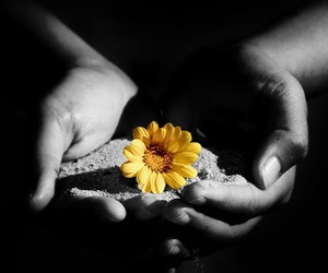 flower, hands, and holding image