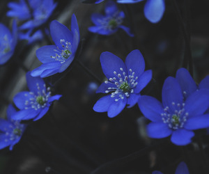 beauty, blue, and flower image