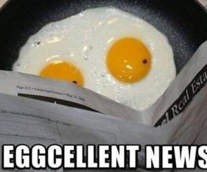 funny, egg, and lol image