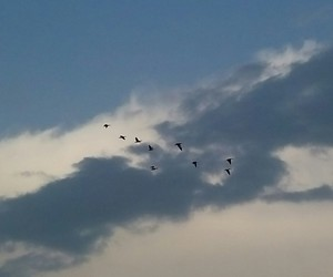 birds, clouds, and fly image