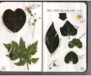 flowers, leaves, and pressed image