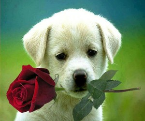 amore, cane, and sweet image