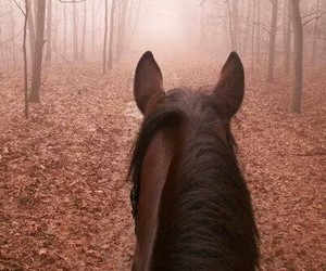 autumn, away, and horse image