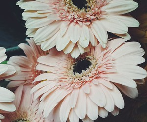 beautiful, daisy, and tumblr girl image