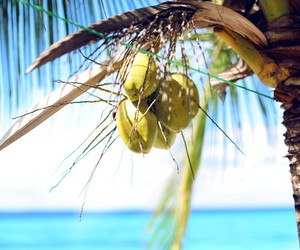 beach, coconut, and summer image