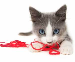 kitten and cute animals image