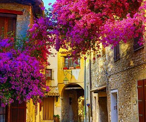 pink trees, beautiful, and france image