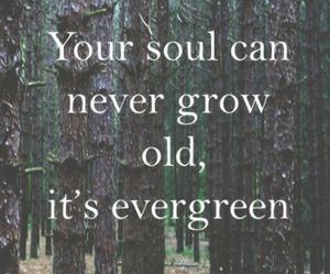 quote, ed sheeran, and soul image