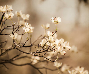 brown, Dogwood, and flowers image