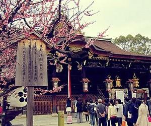 beauty, sakura, and sugoii image