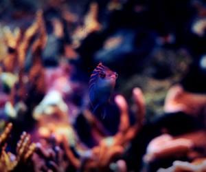 aquarium, attention, and fish image