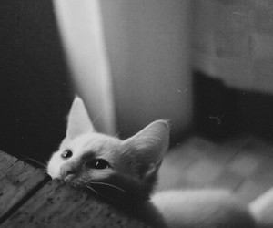 adorable, black and white, and grunge image