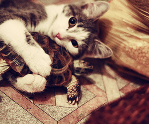 cat, cute, and turtle image