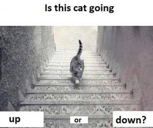 cat, up, and down image