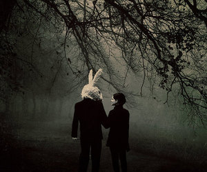 rabbit, dark, and forest image