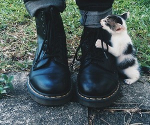 grunge, cute, and cat solfgrunge image