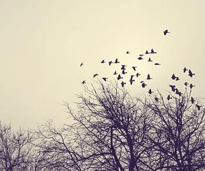 bird, tree, and free image
