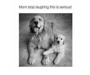 dogs, funny, and cute image